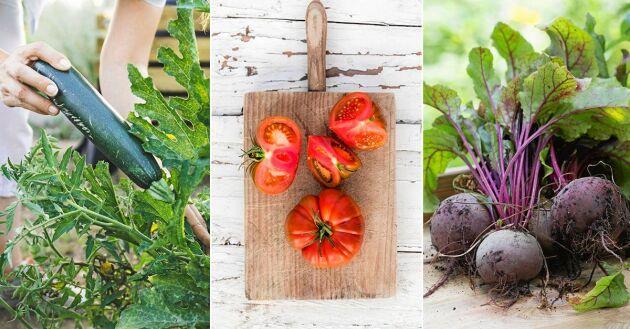 Frys in sommarens skörd av grönsaker – eller grönsaker som håller på att bli gamla i kylen – och njut hela vintern!