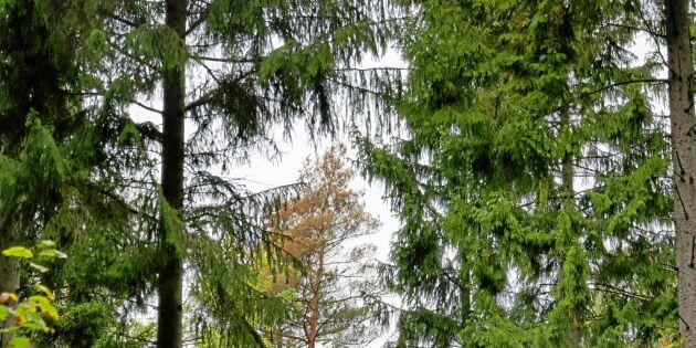 """""""Ökade risker med att äga skog"""""""