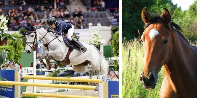 Fokus på svenskuppfödda hästar under ridsport-EM