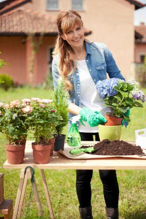 Ge gärna hortensian en liten vattenreservoar i ytterkrukan.