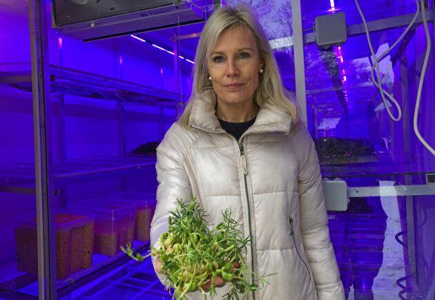 Grödorna som har valts ut behöver inte något aktivt näringstillskott utan tar i stället upp sitt kväve direkt från den inpumpade containerluften, förklarar Charlotte Åkerlind.