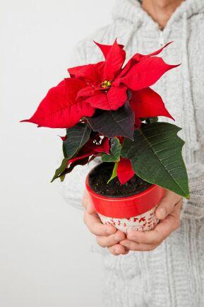 Julros, vacker och symbolisk!
