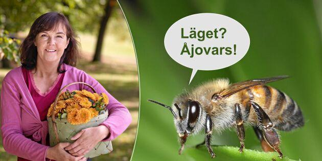 Krönika: Vad skulle mina honungsbin säga om de kunde prata?