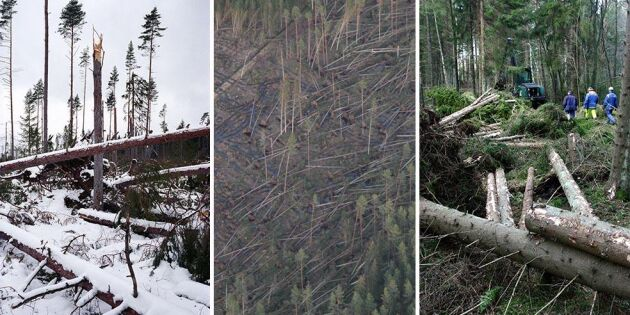 Stormarna som skadat svenska skogarna