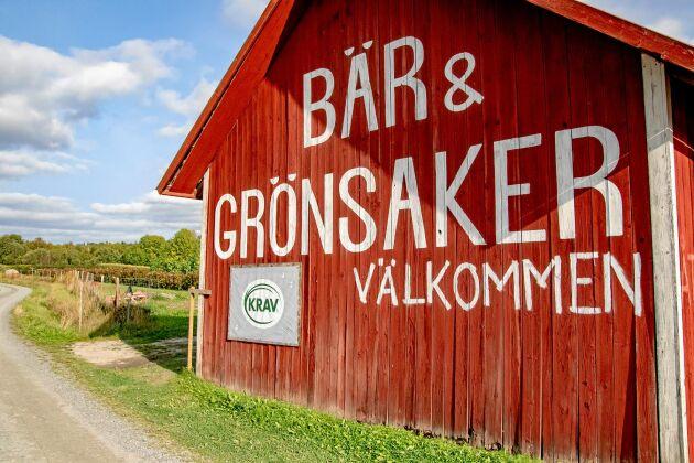 Närodlat. Adriana köper vitkålen från en Krav-certifierad odling i Storå i trakten.