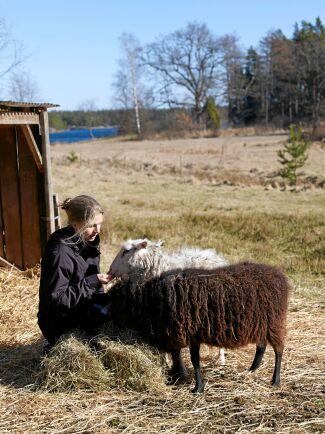 Maria gosar med några av familjens får i vårsolen. De betar i en hage nedanför huset alldeles intill vattnet.