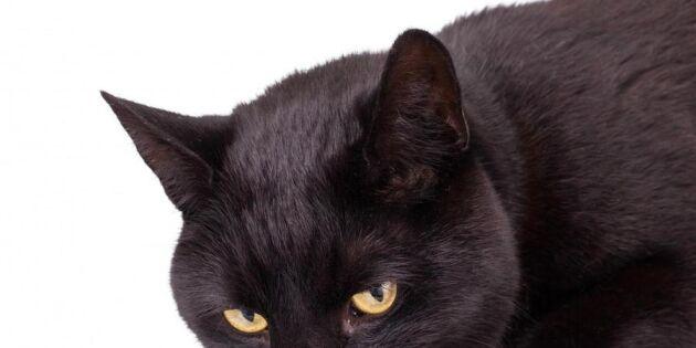 Larm: Nytt råttgift dödar våra husdjur