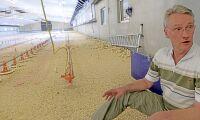Fick avliva 70 000 friska kycklingar
