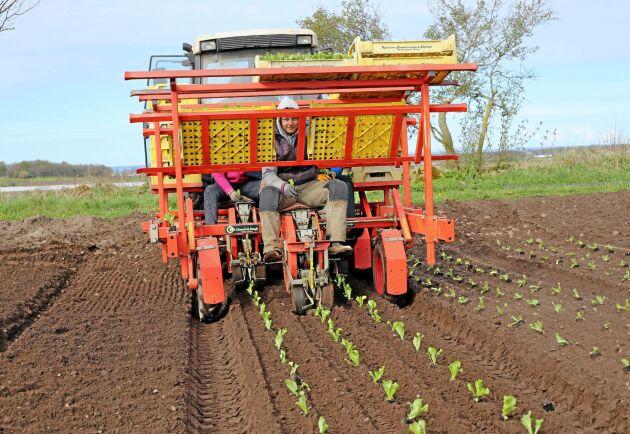 Ekologisk produktion har varit svenskt lantbruks tillväxtraket de senaste tio åren, skriver Sofia Sollén-Norrlin.