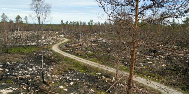 Risk för miljardnota efter skogsbränderna