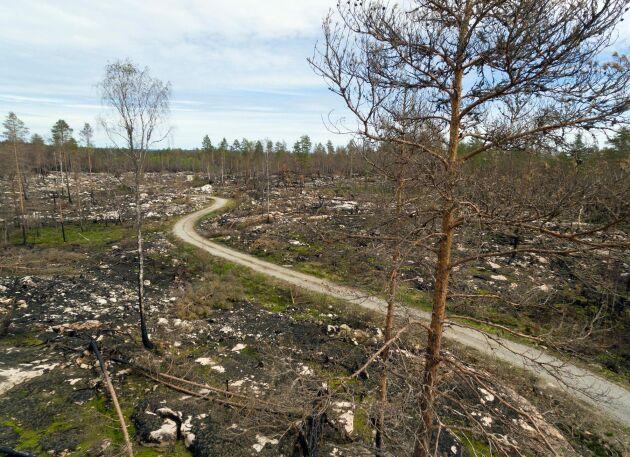 Skogssbilväg genom det brandskadade området i Västmanland.