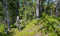 Fem strategier som kan visa vägen i skogen
