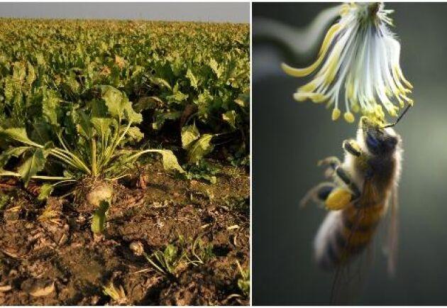 Mark- och miljödomstolen upphäver Kemikalieinspektionens beslut om nöddispens för växtskyddsmedlet Gaucho WS 70.