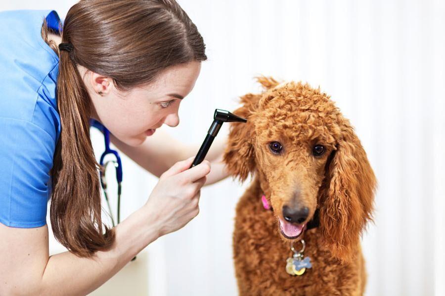 veterinar2