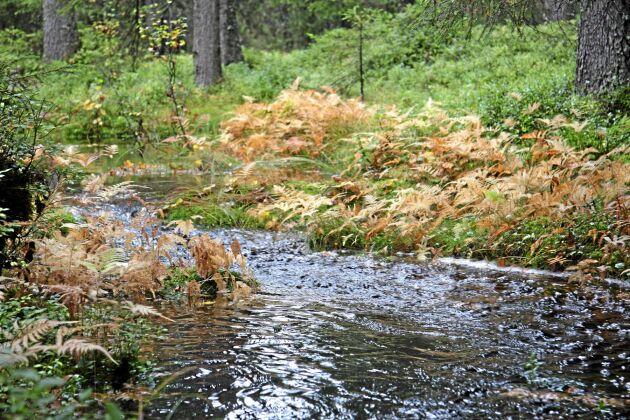 Nyckelbiotop i form av en skogsbäck.