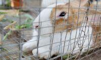 Gjorde intrång och stal kaniner
