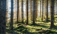 Här får du mest skog för pengarna
