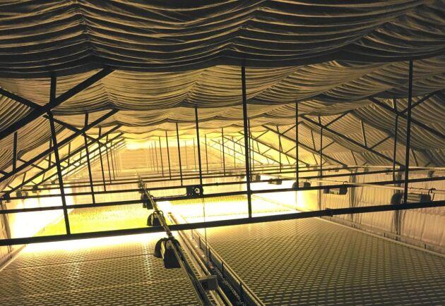 Ljus i vintermörkret. 150 ton pellets går åt per år för att odlingarna ska ha det ljust och varmt...