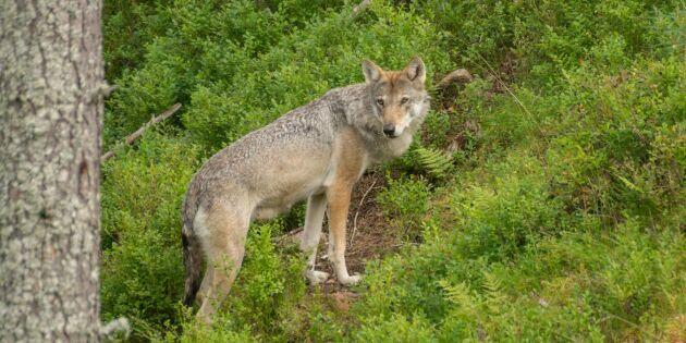 Lång väntan på åtal i jaktbrottsmålet