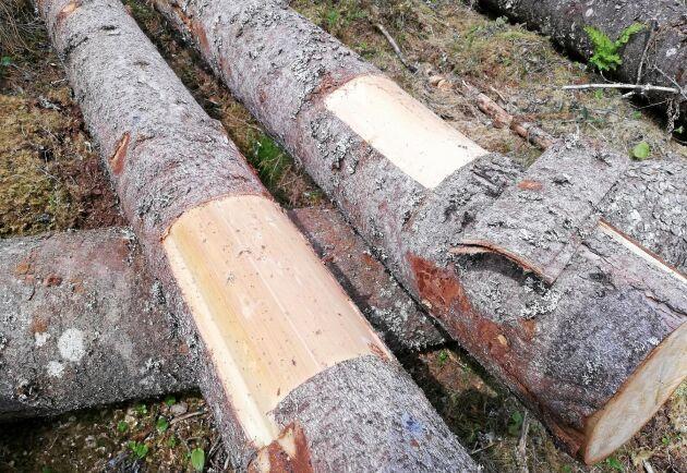 Fälla. I stället för att gå på de doftmaskerade granarna kan barkborrarna lockas till feromonfällor eller fångstvirke.