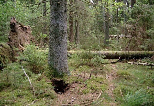 Att visa skogsägarna tillit är viktigt i frågan om rapportering av frivilliga avsättningar, menar Södra.