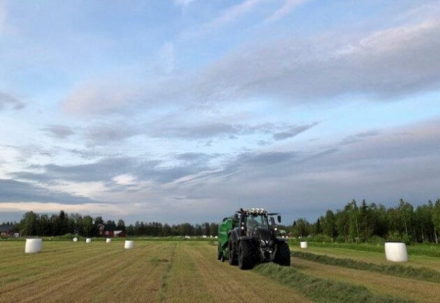i Narken, nära Korpilombolo, är skörden av Elaine Björnfots 70 hektar vall i full gång. Två tredjedelar är redan taget.