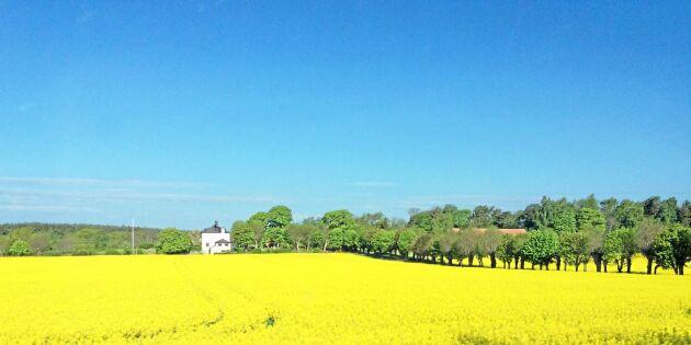 Har du Sveriges grannaste fält?
