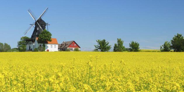 Dialektdöden sveper över Sverige