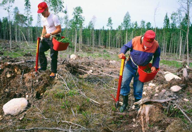 Ett examensarbete från Luleå tekniska universitet kan leda till att det snart finns planteringsrör anpassade för vänsterhänta på marknaden.