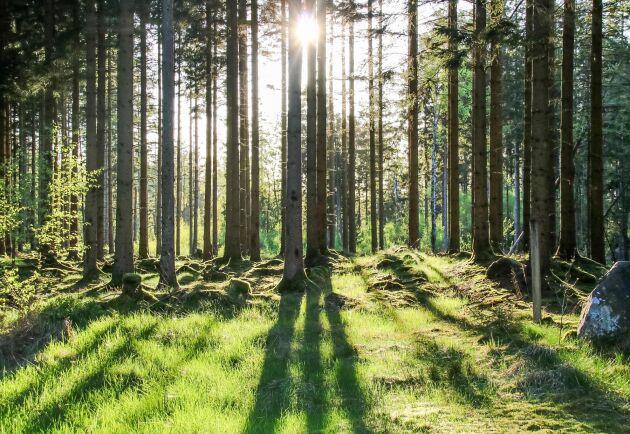 Försäljningen omfattar bland annat 2300 hektar i Tönnersjöheden, välbekant mark för skogligt utbildade i Sverige på grund av de fältförsök som SLU och Skogforsk bedrivit där.