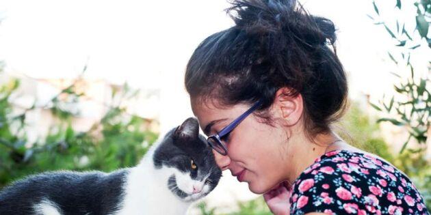 13 heliga punkter som får din katt att må bra