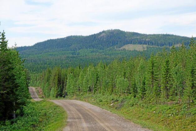 För Skogsstyrelsen blir de många ansökningarna om tillstånd att avverka ett merarbete, och för skogsägarna betyder det långa handläggningstider.
