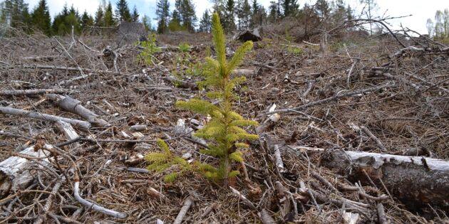 Ny satsning på maskinell skogsplantering
