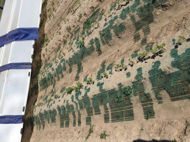 Bilden, som närmast för tankarna till en gammal färgskrivare, visar hur maskinen bara skriver ut växtskyddsmedel där det behövs.