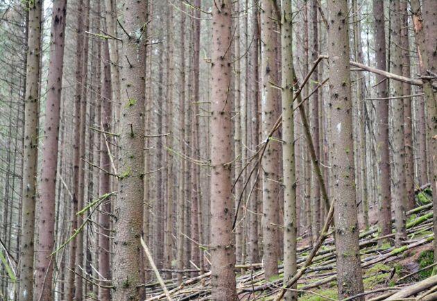 Produktionen i skogen kan öka. Men då krävs att någon pekar ut riktningen och ett nytt samhällskontrakt med skogsägarna, anser Tomas Lundmark.