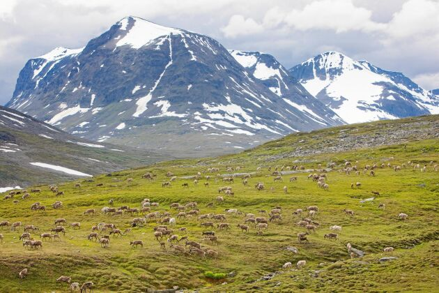 Sarek nationalpark i Lappland.