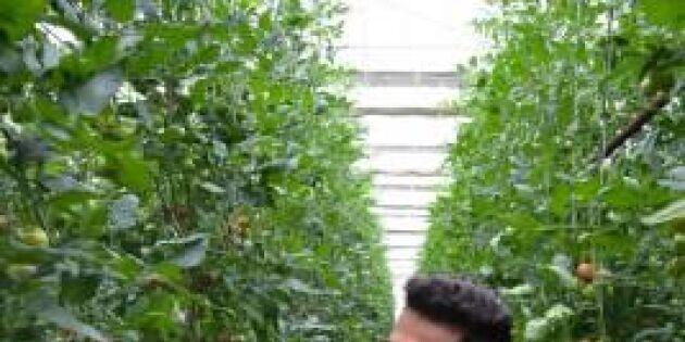 Ramin från Afghanistan fick jobb på Marcus tomatodling