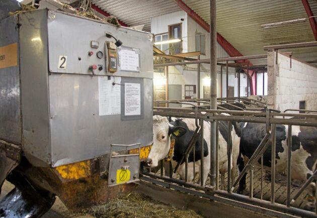 Avkastningen på mjölkgården ligger i dagsläget på 13 200 kilo/ECM per djur och år.