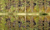 Svenska skogar på Luxemburgbörsen