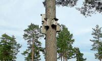 Tätbebyggd tall där fåglar flockas