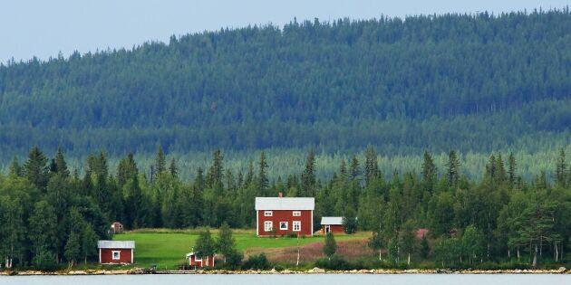 Priserna på skogsfastigheter planar ut
