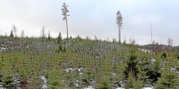 Skogsföretag värst drabbade av konkurser