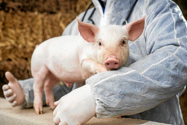 År 2006 förbjöds användning av antibiotika i rent tillväxtökande syfte inom EU. En överdriven användning gynnar spridningen av resistenta bakterier.
