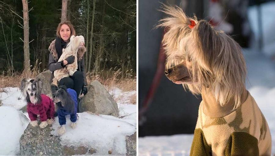 Elin Gunnarsson är uppfödare och bor tillsammans med sex kinesiska nakenhundar. Foto: Privat