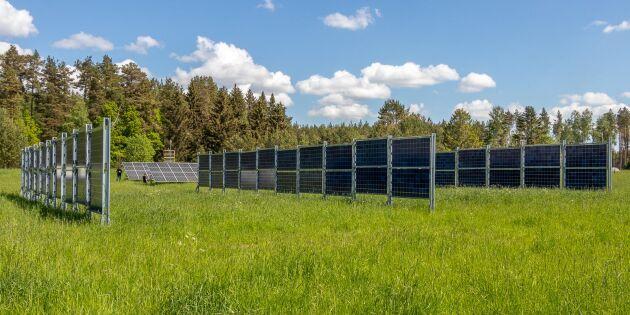 Solel ger tio gånger större skörd än energiskog