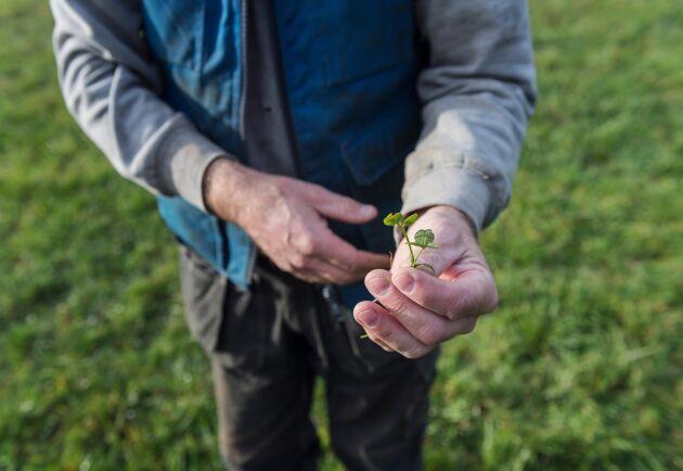 Regeringen ger mer pengar till Sveriges lantbruksuniversitet (SLU) för utbildning till bristyrken. Arkivbild.