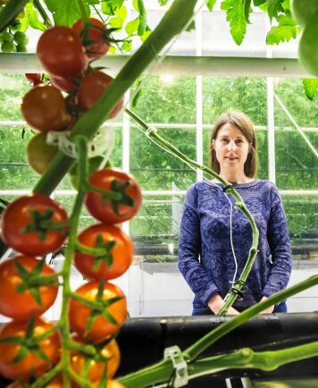 Efterfrågan är enorm på svenskodlade tomater året om, menar vd Elena Petukhovskaya.