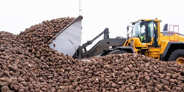 Betodlare drabbas av problem på sockerbruk