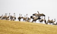 Får 100 000 för fågelskador