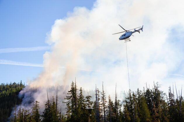 Helikopter bekämpar bränder i närheten av Port Alice i norra delarna av Vancouver Island i delstaten British Columbia.